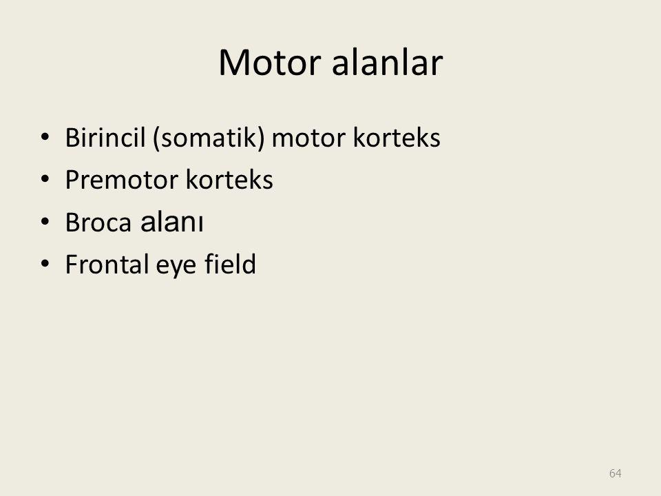 Motor alanlar Birincil (somatik) motor korteks Premotor korteks