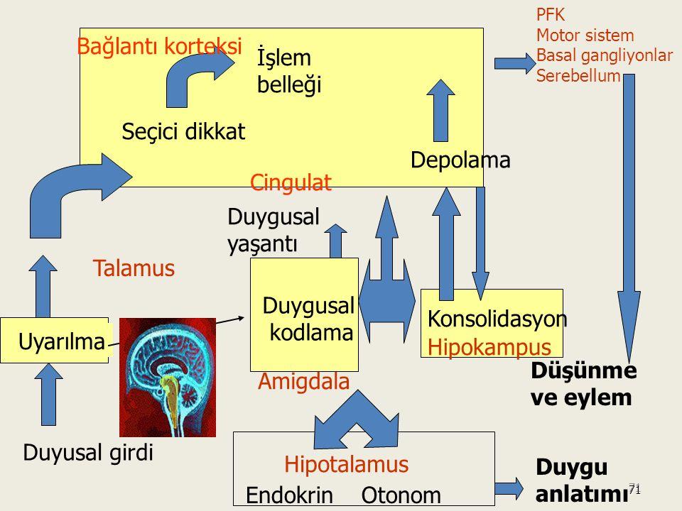 Bağlantı korteksi İşlem belleği Seçici dikkat Depolama Cingulat