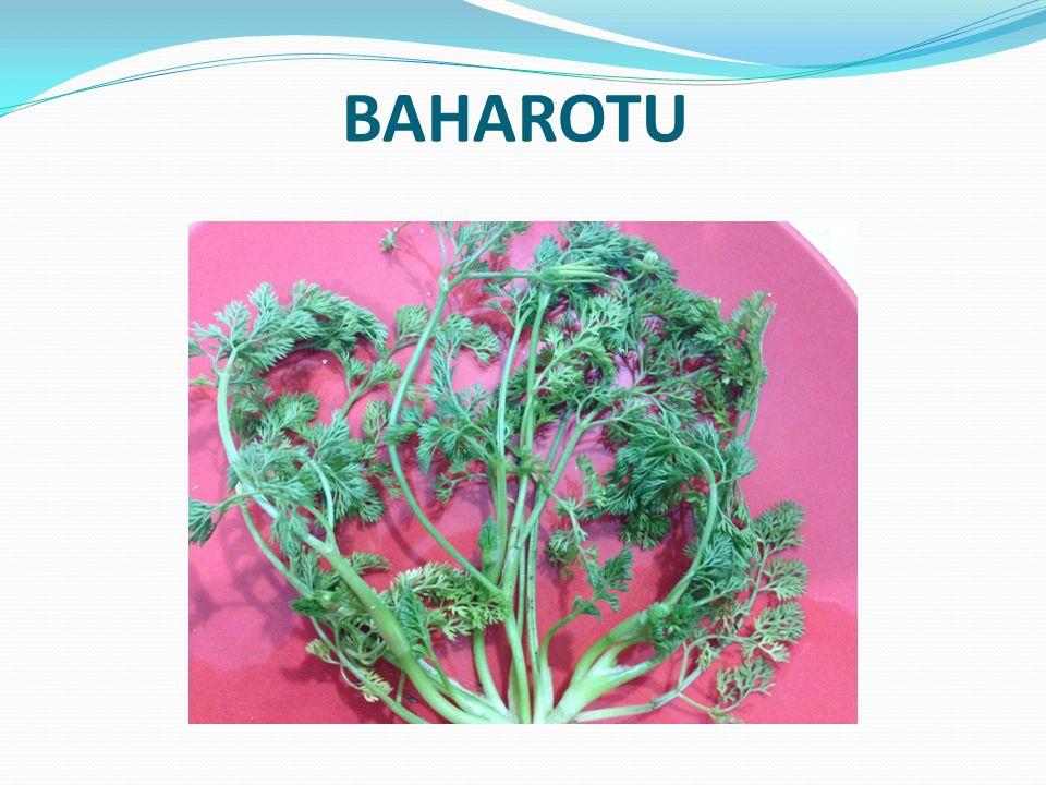 BAHAROTU