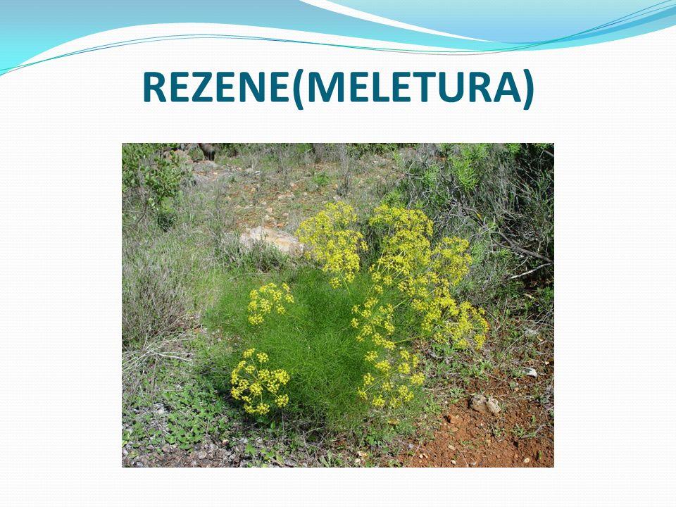 REZENE(MELETURA)
