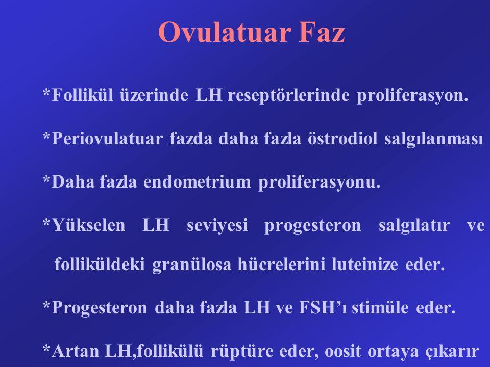 Ovulatuar Faz *Follikül üzerinde LH reseptörlerinde proliferasyon.