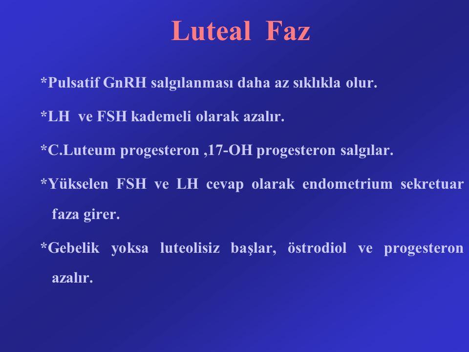 Luteal Faz *Pulsatif GnRH salgılanması daha az sıklıkla olur.