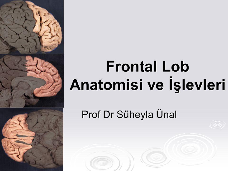 Frontal Lob Anatomisi ve İşlevleri