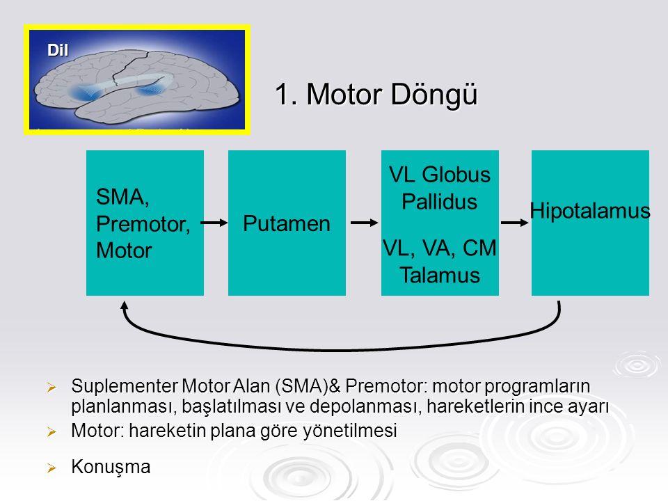 1. Motor Döngü SMA, Premotor,Motor Putamen VL Globus Pallidus
