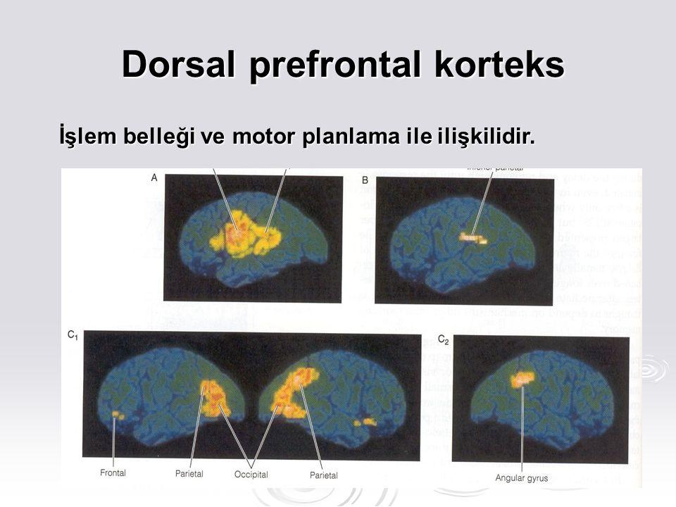 Dorsal prefrontal korteks