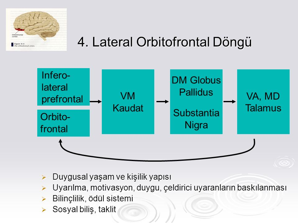 4. Lateral Orbitofrontal Döngü