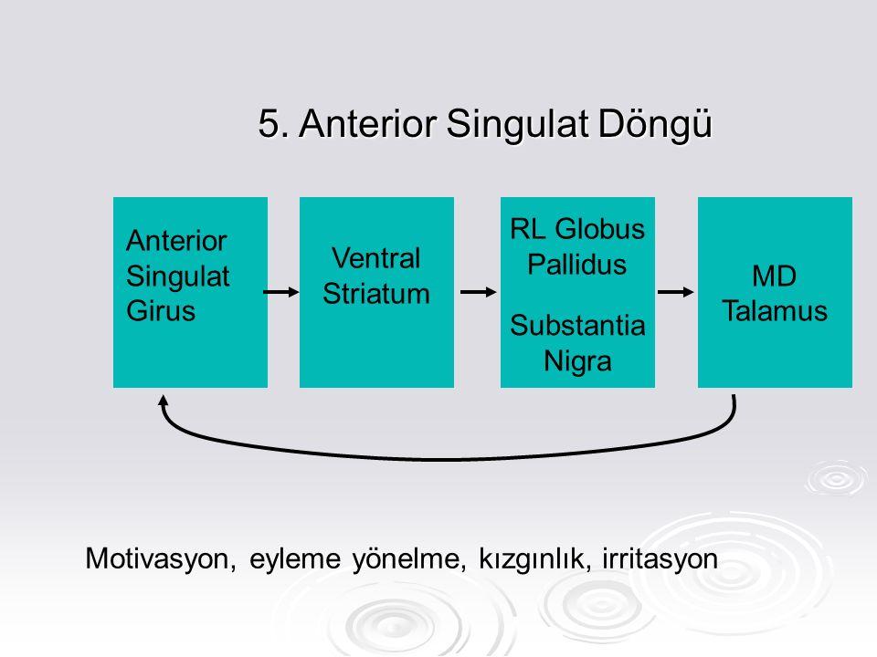 5. Anterior Singulat Döngü