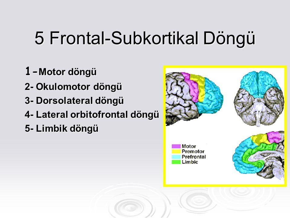 5 Frontal-Subkortikal Döngü