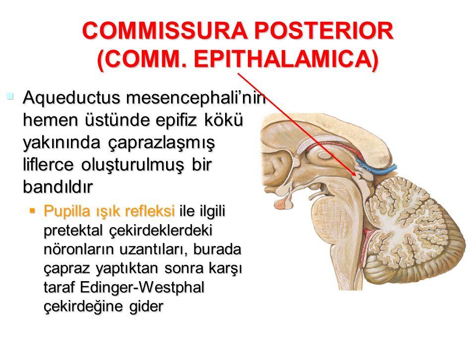COMMISSURA POSTERIOR (COMM. EPITHALAMICA)