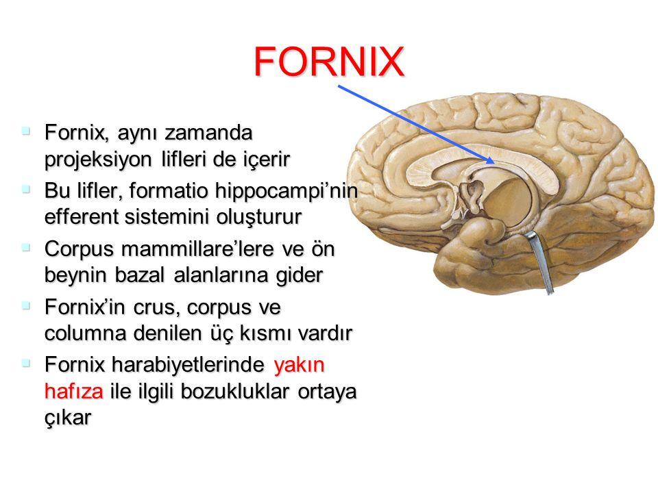 FORNIX Fornix, aynı zamanda projeksiyon lifleri de içerir