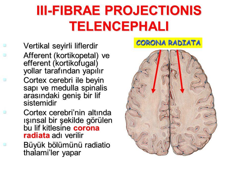 III-FIBRAE PROJECTIONIS TELENCEPHALI