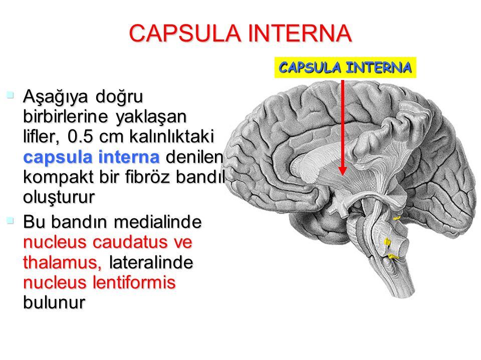 CAPSULA INTERNA CAPSULA INTERNA.