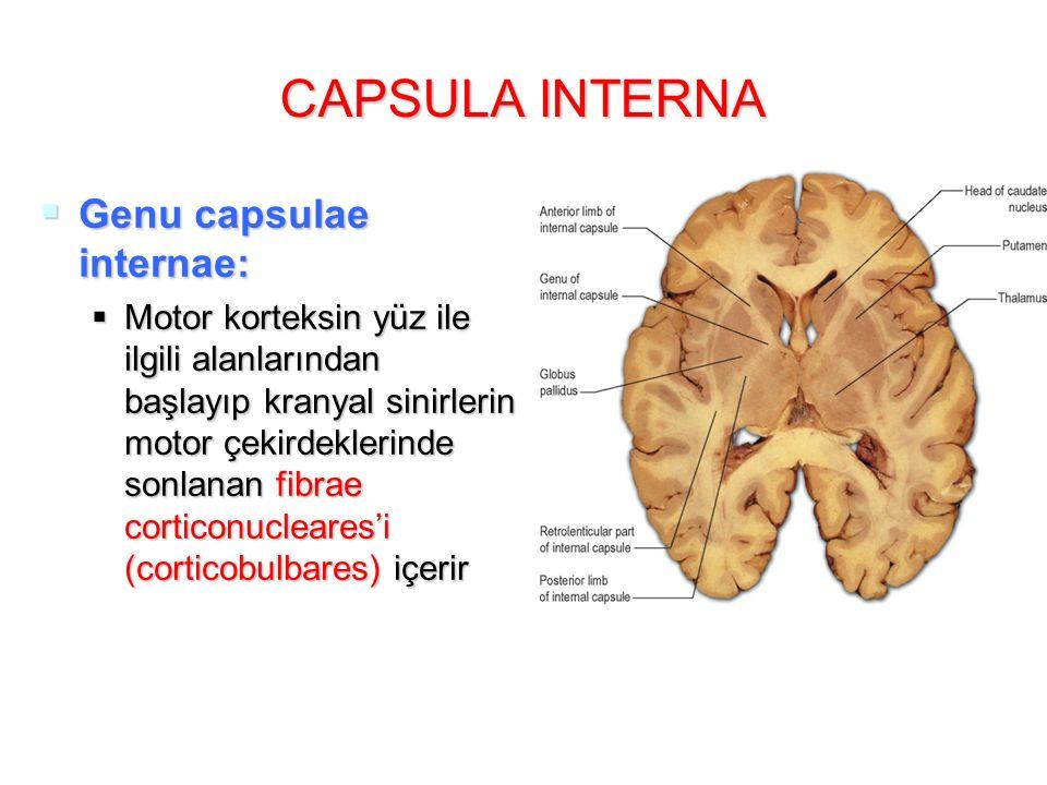 CAPSULA INTERNA Genu capsulae internae: