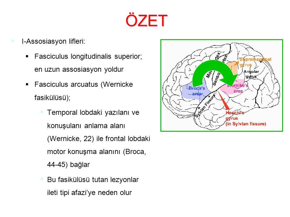 ÖZET I-Assosiasyon lifleri: