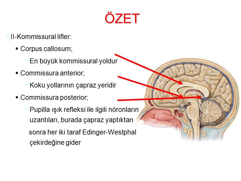 ÖZET II-Kommissural lifler: Corpus callosum;