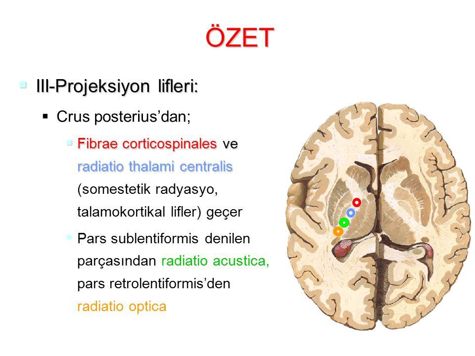 ÖZET III-Projeksiyon lifleri: Crus posterius'dan;