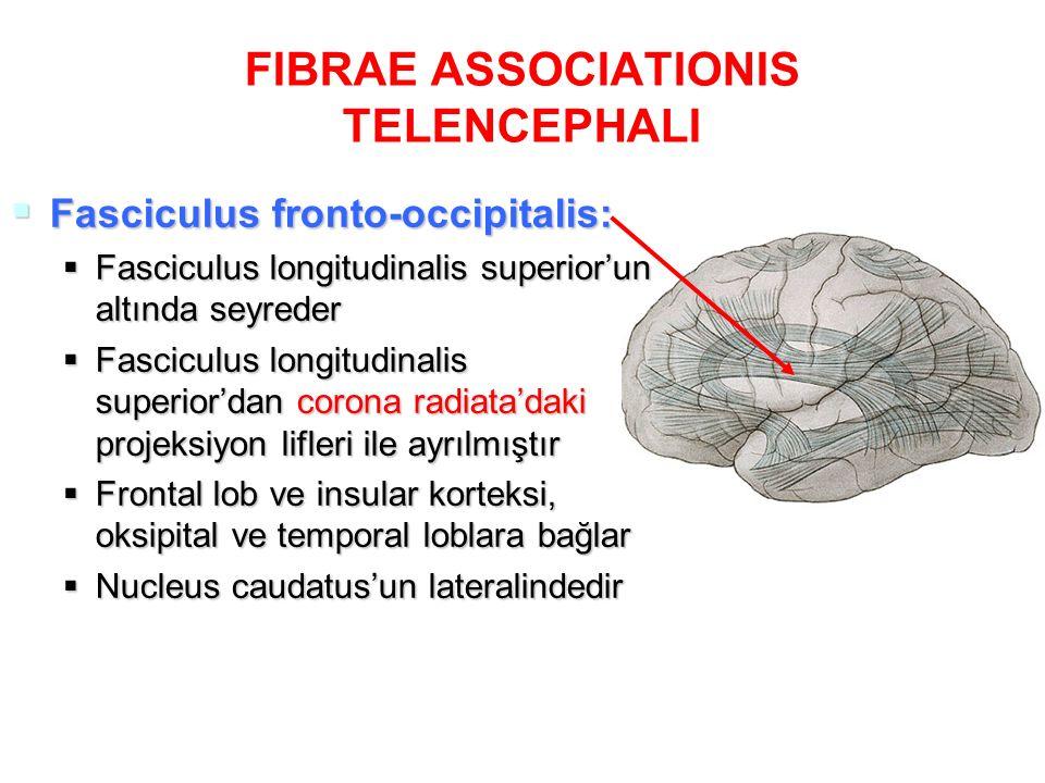 FIBRAE ASSOCIATIONIS TELENCEPHALI