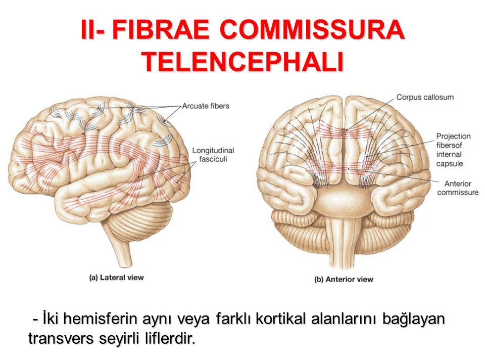 II- FIBRAE COMMISSURA TELENCEPHALI