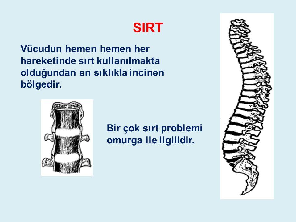 SIRT Vücudun hemen hemen her hareketinde sırt kullanılmakta olduğundan en sıklıkla incinen bölgedir.