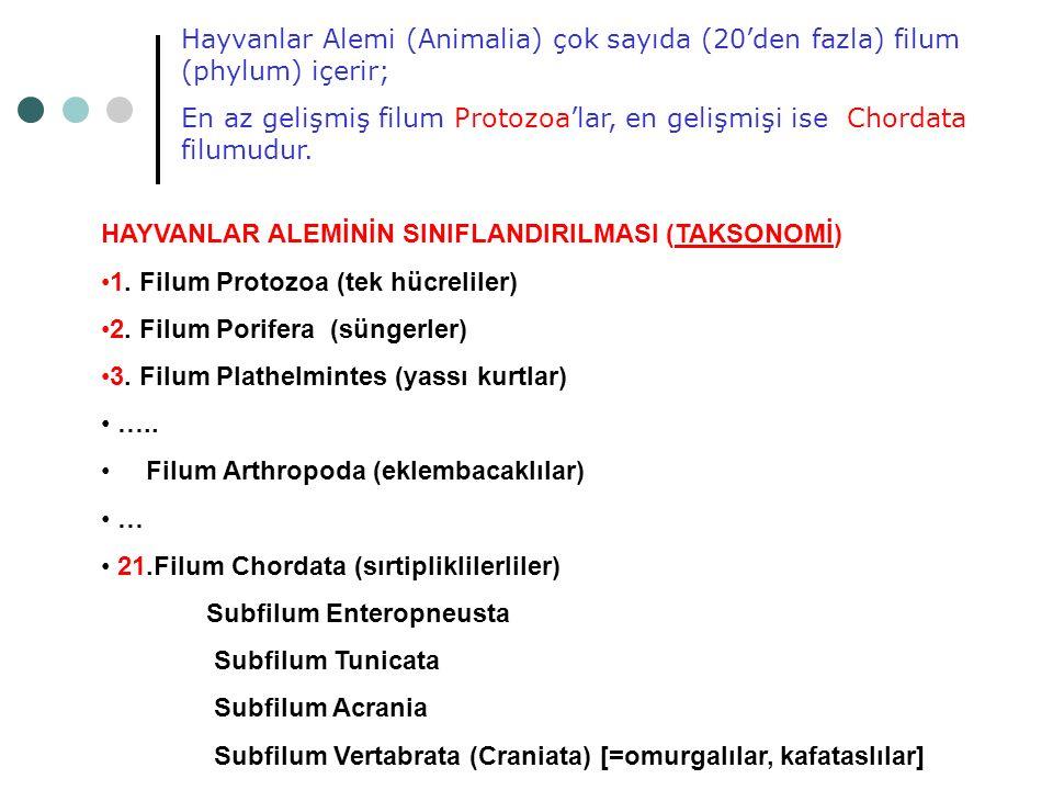 Hayvanlar Alemi (Animalia) çok sayıda (20'den fazla) filum (phylum) içerir;