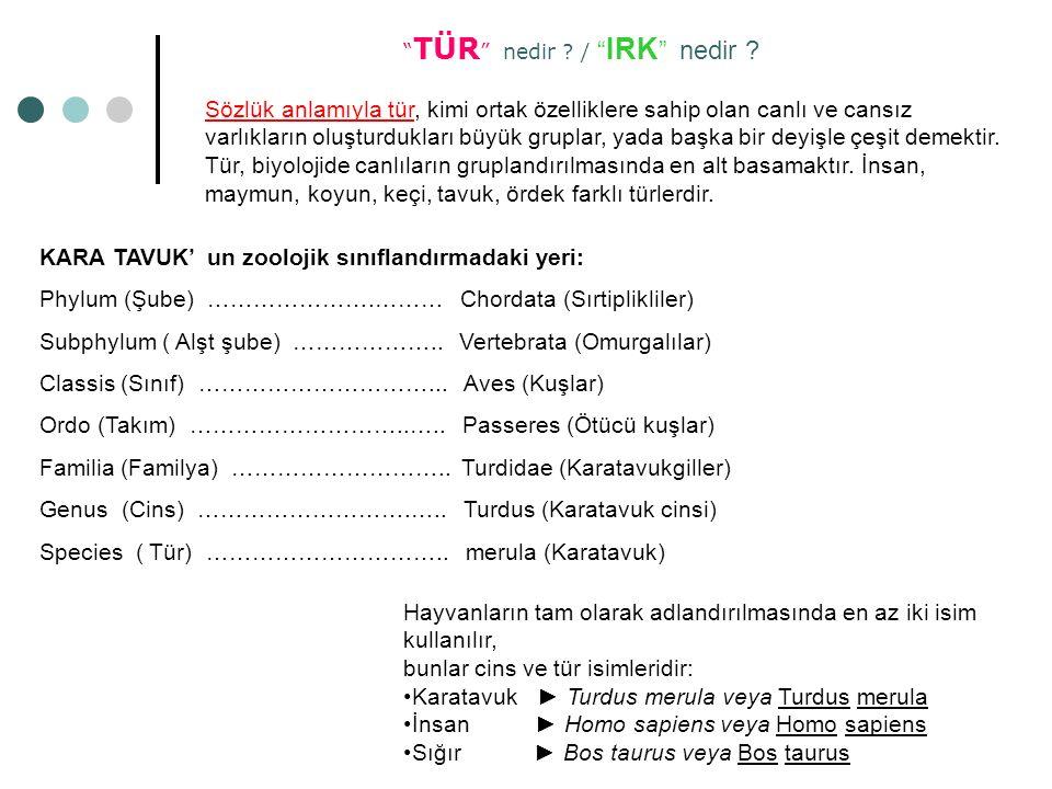 KARA TAVUK' un zoolojik sınıflandırmadaki yeri: