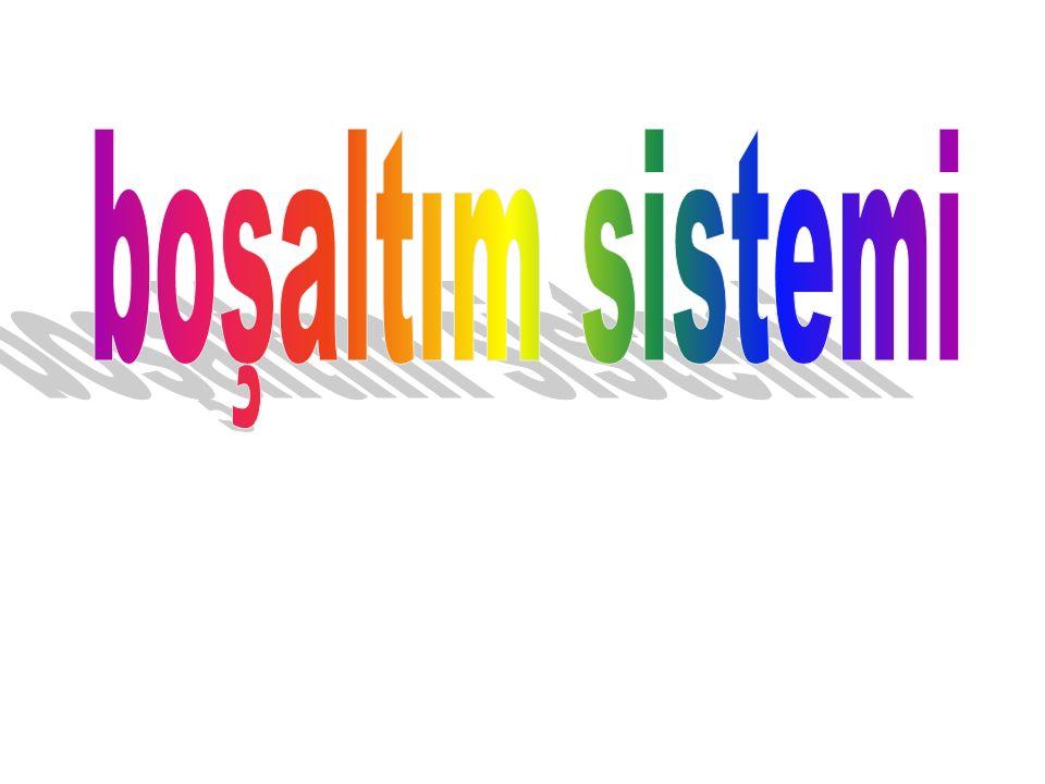 boşaltım sistemi