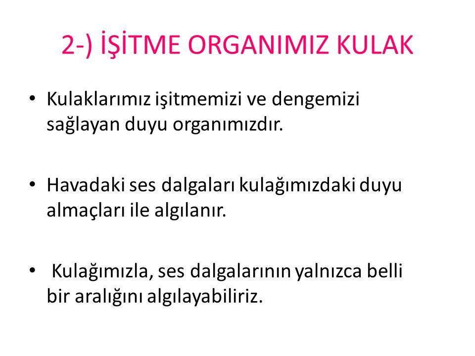 2-) İŞİTME ORGANIMIZ KULAK
