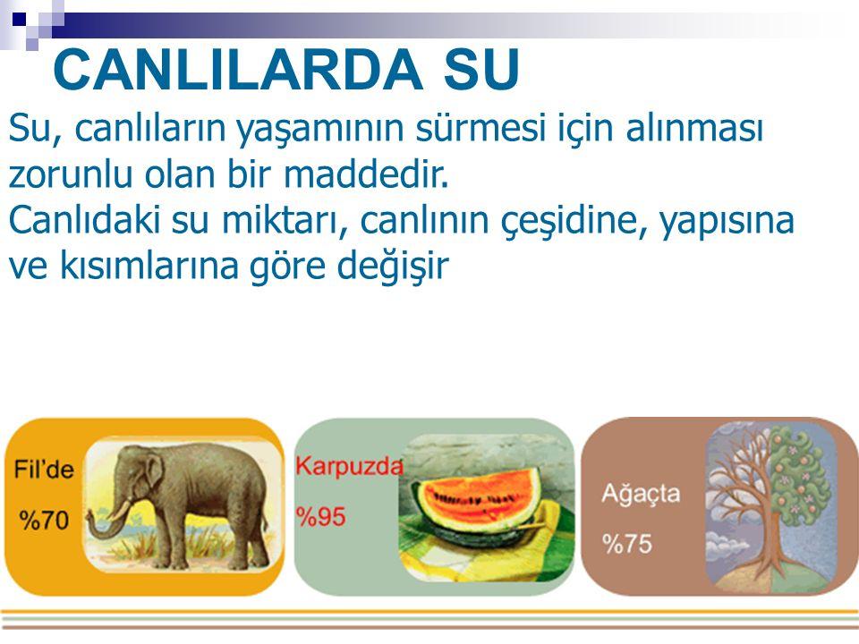 CANLILARDA SU Su, canlıların yaşamının sürmesi için alınması zorunlu olan bir maddedir.