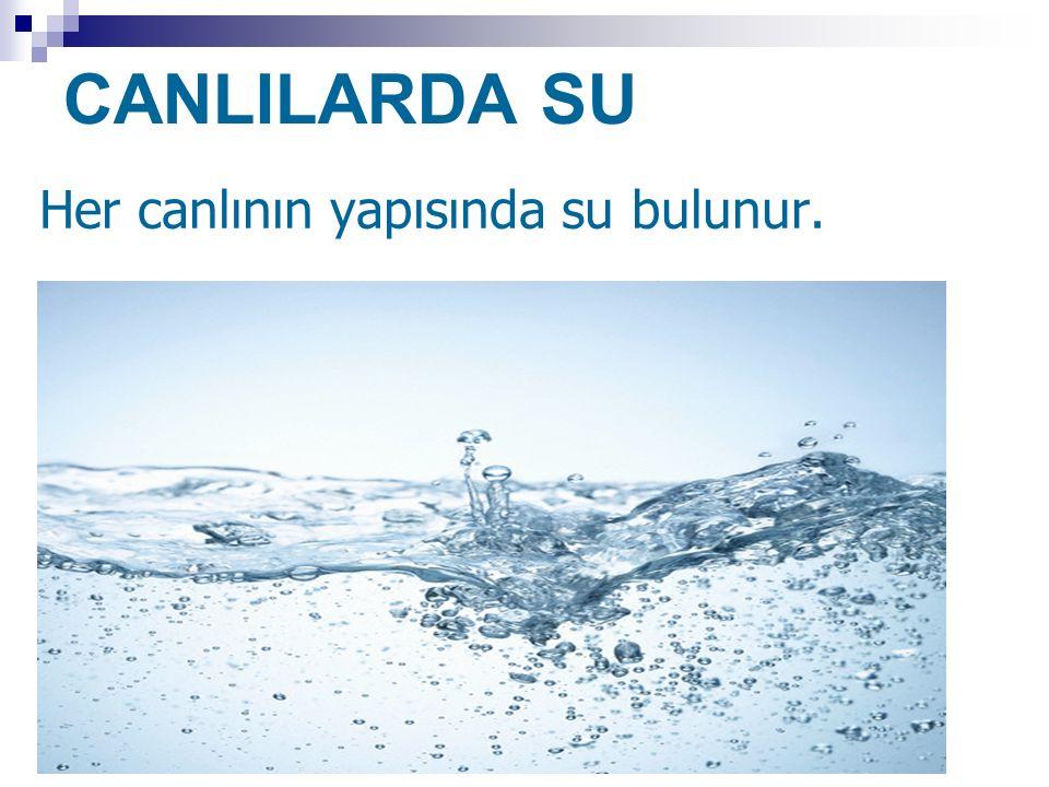 CANLILARDA SU Her canlının yapısında su bulunur.