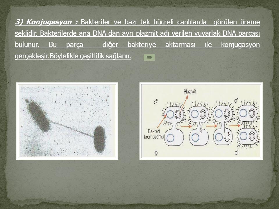 3) Konjugasyon : Bakteriler ve bazı tek hücreli canlılarda görülen üreme şeklidir.
