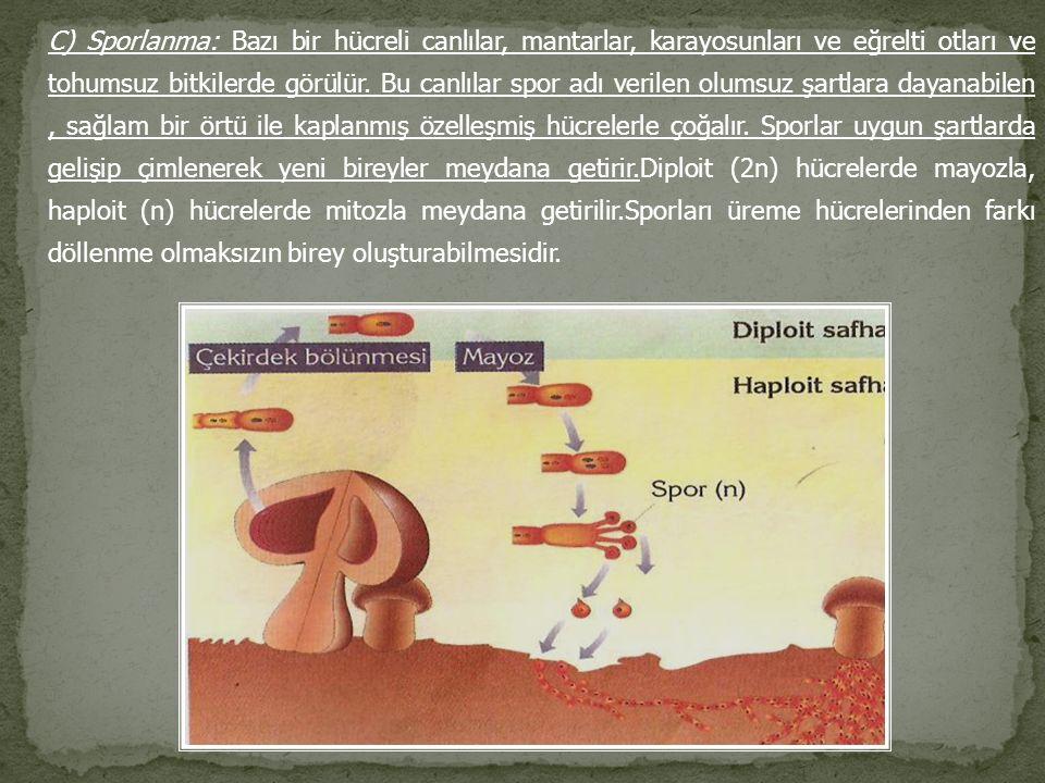C) Sporlanma: Bazı bir hücreli canlılar, mantarlar, karayosunları ve eğrelti otları ve tohumsuz bitkilerde görülür.