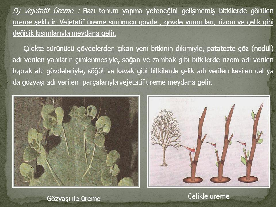 D) Vejetatif Üreme : Bazı tohum yapma yeteneğini gelişmemiş bitkilerde görülen üreme şeklidir. Vejetatif üreme sürünücü gövde , gövde yumruları, rizom ve çelik gibi değişik kısımlarıyla meydana gelir.