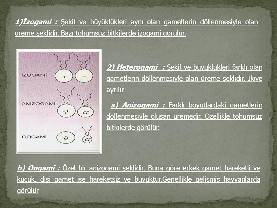 1)İzogami : Şekil ve büyüklükleri aynı olan gametlerin döllenmesiyle olan üreme şeklidir. Bazı tohumsuz bitkilerde izogami görülür.