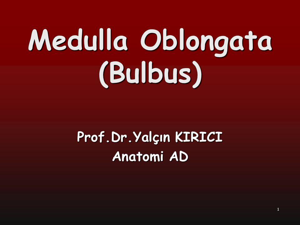 Medulla Oblongata (Bulbus)