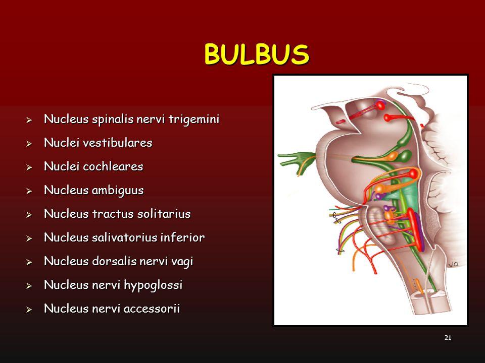 BULBUS Nucleus spinalis nervi trigemini Nuclei vestibulares