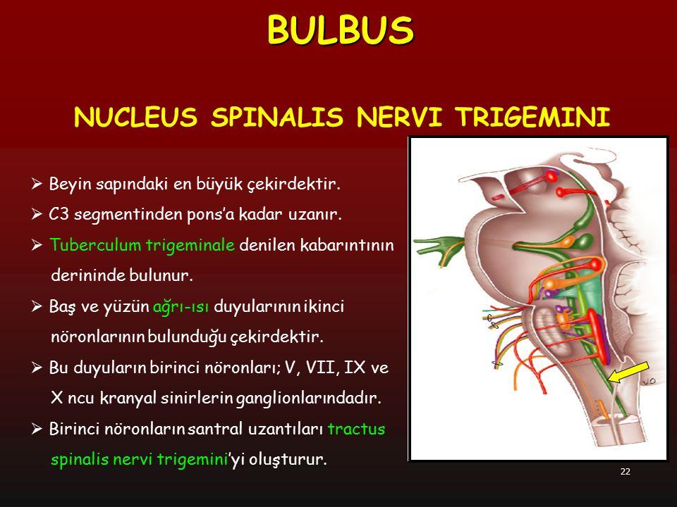 BULBUS NUCLEUS SPINALIS NERVI TRIGEMINI