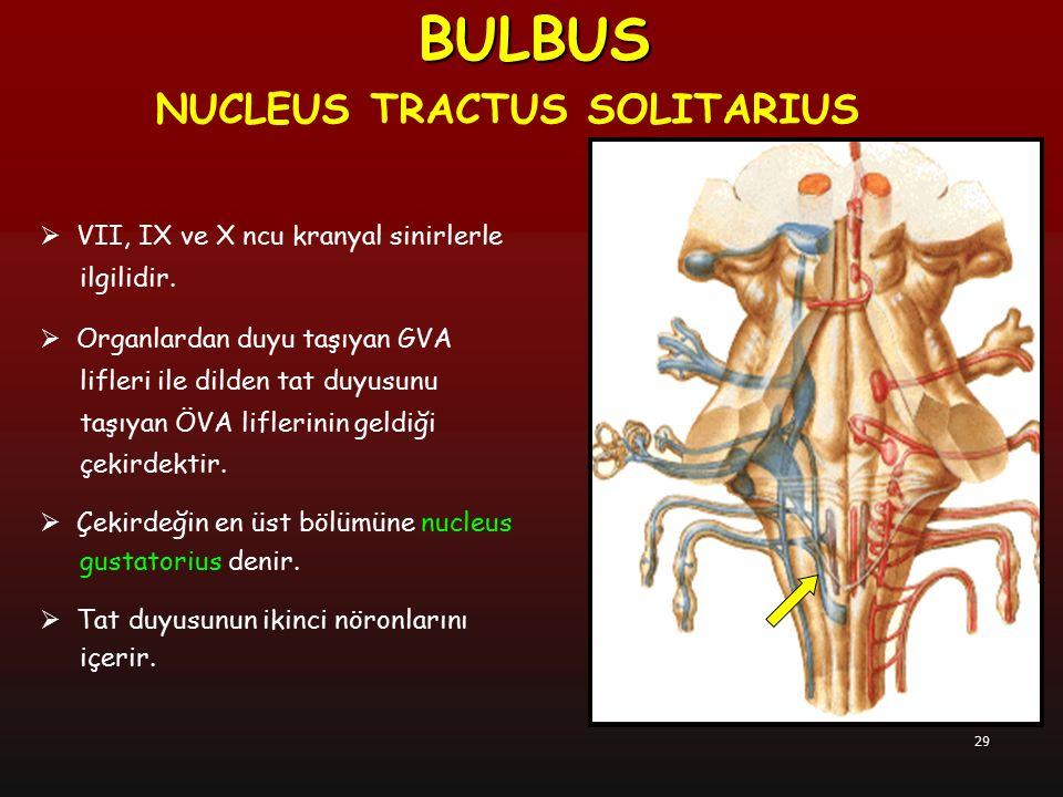 BULBUS NUCLEUS TRACTUS SOLITARIUS VII, IX ve X ncu kranyal sinirlerle