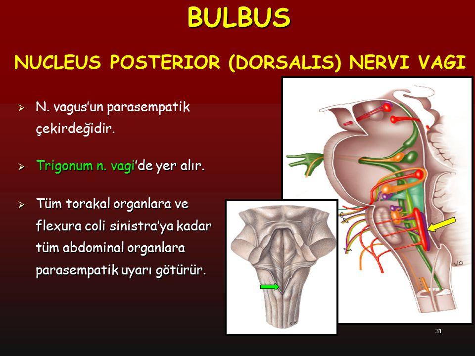 BULBUS NUCLEUS POSTERIOR (DORSALIS) NERVI VAGI