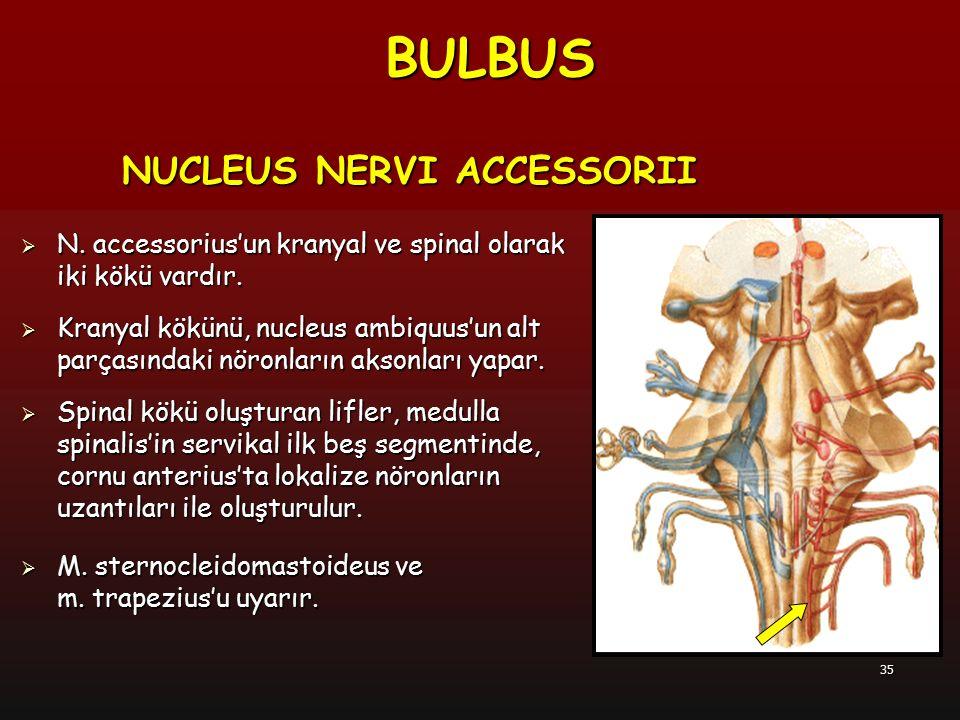 BULBUS NUCLEUS NERVI ACCESSORII