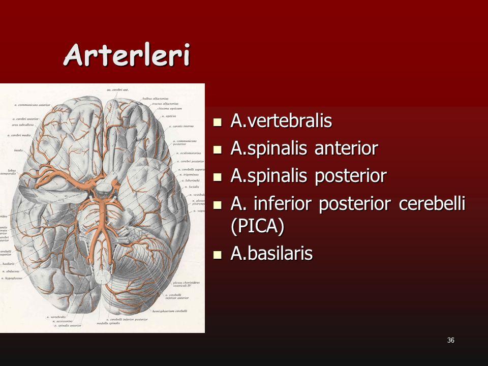 Arterleri A.vertebralis A.spinalis anterior A.spinalis posterior