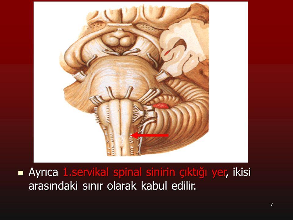 a Ayrıca 1.servikal spinal sinirin çıktığı yer, ikisi arasındaki sınır olarak kabul edilir. 7