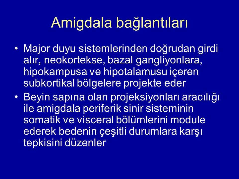 Amigdala bağlantıları