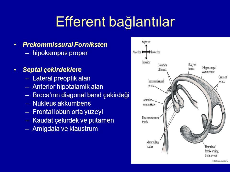 Efferent bağlantılar Prekommissural Forniksten hipokampus proper