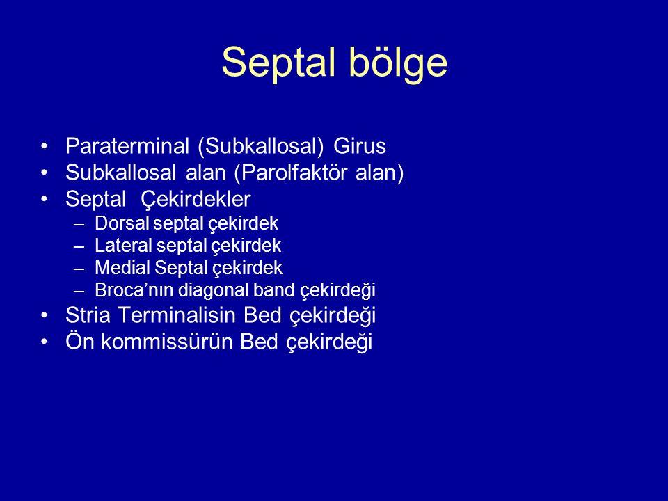 Septal bölge Paraterminal (Subkallosal) Girus
