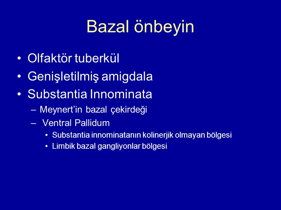 Bazal önbeyin Olfaktör tuberkül Genişletilmiş amigdala