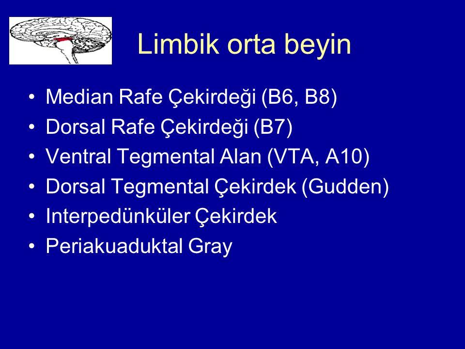Limbik orta beyin Median Rafe Çekirdeği (B6, B8)