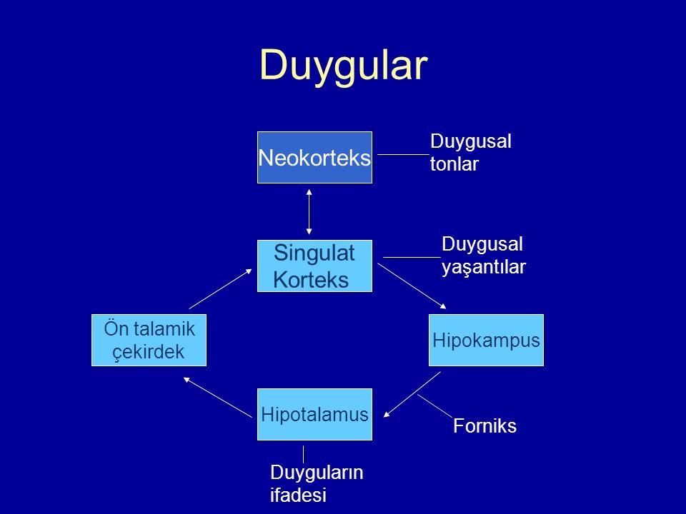 Duygular Neokorteks Singulat Korteks Duygusal tonlar