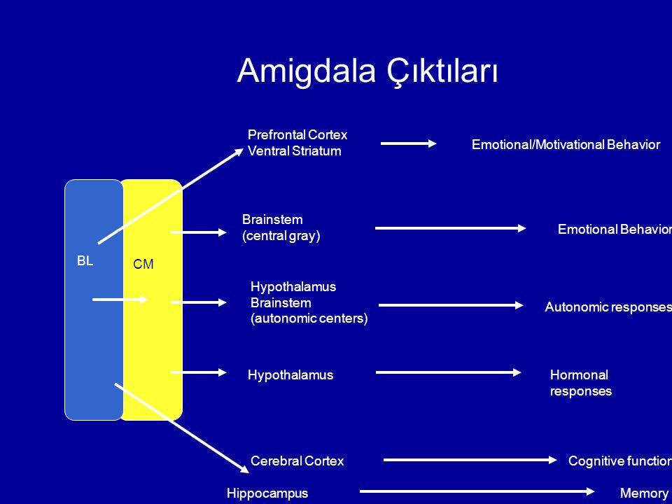 Amigdala Çıktıları Prefrontal Cortex Ventral Striatum