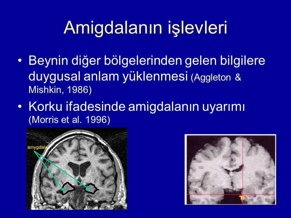Amigdalanın işlevleri