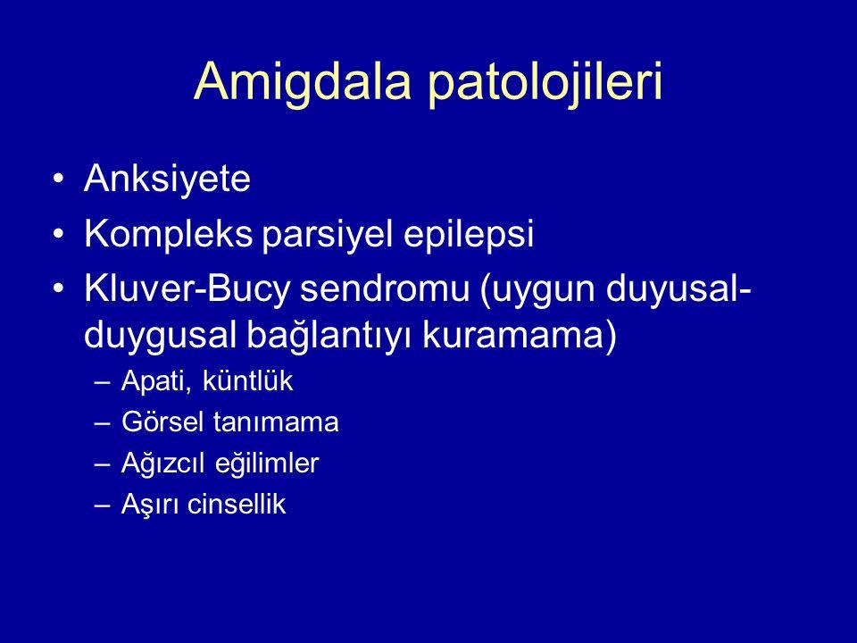 Amigdala patolojileri